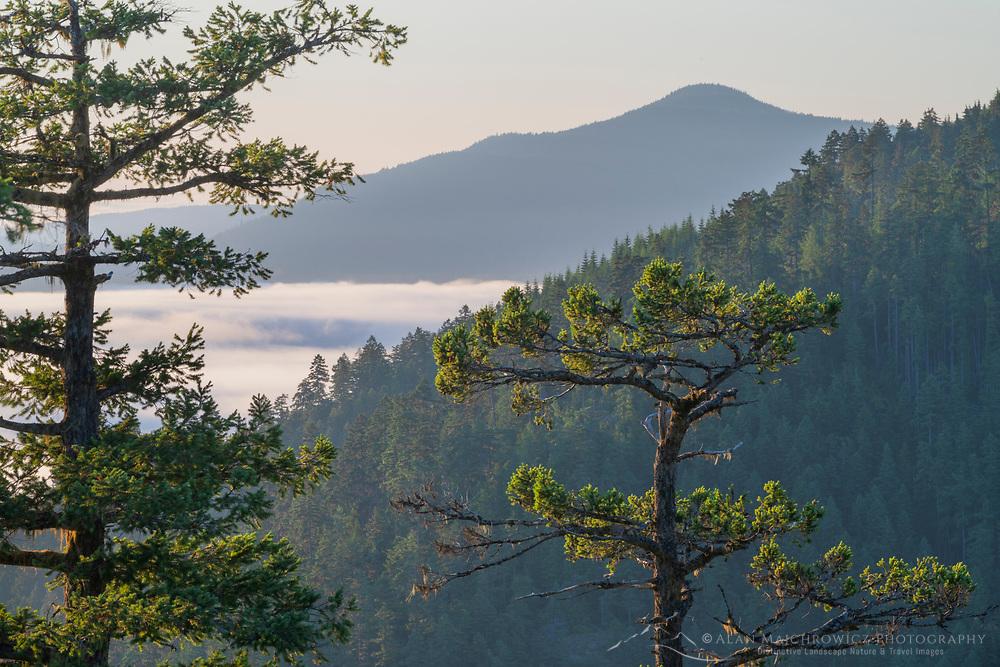 Olympic Mountains, Olympic National Park Washington