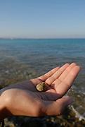 Woman holding a sea snail, Formentera