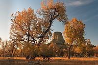 """In October I visited Devils Tower when the fall colors were at their peak. Although the tower is mostly surrounded by a pine forest, there are some deciduous trees to the south by the Belle Fourche River. While wandering around before sunset I found this view with the tower framed in between two trees. Established in 1906 by Theodore Roosevelt, this was the first national monument in the US. Devils Tower is actually a mistranslation of the Native American name """"Mato Tipila,"""" which means Bear Lodge."""