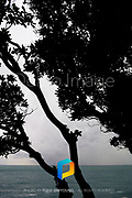 A detail of trees silhouetted against the sea in Italy.