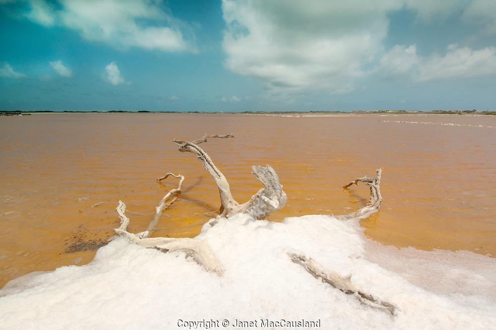 Driftwood and foam edge a salt pan in Bonaire, NA.