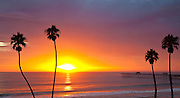 Palm Trees And A Sunset Off The Coast Of Orange County