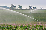 Potato crop being irrigated, Holkham, Norfolk, United Kingdom RESERVED USE - NOT FOR DOWNLOAD -  FOR USE CONTACT TIM GRAHAM