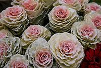 Bialystok, 05.12.2018. Uroczyste otwarcie najwiekszej i najnowoczesniejszej hurtowni kwiatow w Polsce nalezacej do firmy JMP Flowers. Firma jest najwiekszym producentem kwiatow w kraju N/z kwiaty na sprzedaz przechowywane sa w specjalnej chlodni; roze fot Michal Kosc / AGENCJA WSCHOD