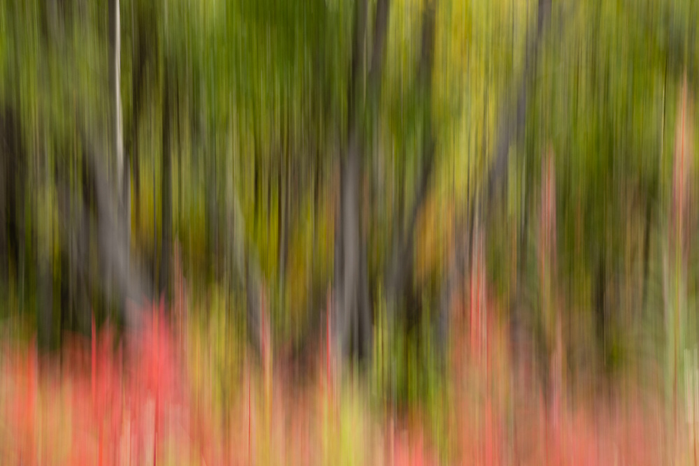 In-camera motion blur of Common Fireweed and trees in Southcentral Alaska. Autumn. Afternoon.