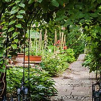 A view through an arbour covered with hardy kiwi vines into a secret kitchen garden.