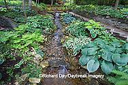 65021-028.08 Shade garden with stream on hillside, path, bridge, hostas, ferns,  St. Louis  MO