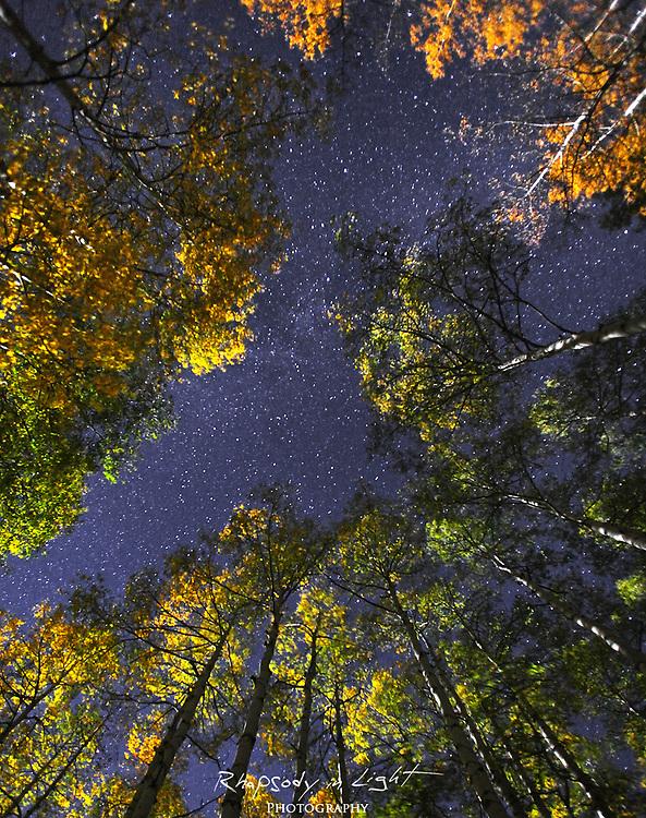 The rising moon illuminated this aspen grove.