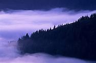 Evening fog along the coastal cliffs of the King Range, Lost Coast, near Shelter Cove, Humboldt County, CALIFORNIA