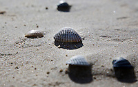 VLIELAND - Schep op het strand van VlielandANP COPYRIGHT KOEN SUYK