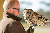 A naturalist shows off a Barred owl at Assateague Island Nation Seashore.