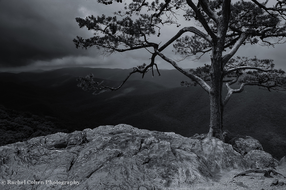 """""""Darkness upon Ravens Roost""""<br /> <br /> Gorgeous lone pine tree at Ravens Roost Overlook in the Blue Ridge Mountains of virginia. Beautifully done in black and white!"""
