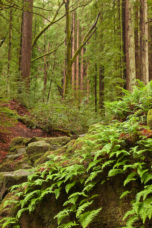 This is a lovely hiking trail in Larkspur, California called Baltimore Canyon. It's mossy green during the winter rainy months and besides being breathtakingly beautiful it's also a great place to take your dog for a hike too.