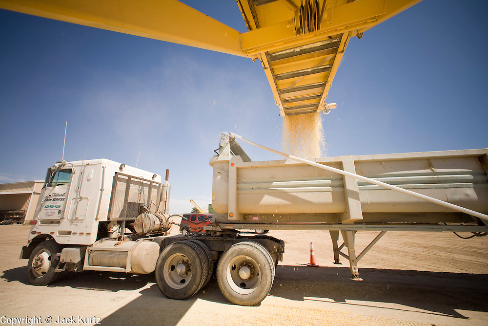 05 MAY 2008 -- BUCKEYE, AZ: A truck is loaded with corn based cattle feed at the Heiden Land & Cattle Company feed lot in Buckeye, AZ. Les Heiden, owner of the Heiden Land & Cattle Company, said his corn prices have gone up by 123% since May, 2006. He attributes about 85 percent of the price increase to the ethanol industry, which he said his buying five times more corn now than they were two years ago. Heiden feeds about 4,500 head of cattle in his feed lot, which is west of Phoenix.  Photo by Jack Kurtz