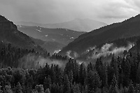 As I drove into the Absaroka Mountains towards Kirwin, a storm was clearing. I loved this view looking up a valley with fog between the trees.