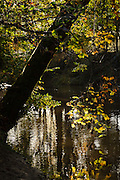 USA, Oregon, Scio, Autumn Vine Maple leaves (Acer ciricinatum) over Crabtree Creek
