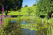 Wildlife pond, wildflowers, pond plants, apple tree and hornbeam tree in a country garden in The Cotswolds, Oxfordshire, UK