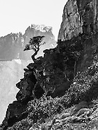 Taken in Torres del Paine National Park, in Chile, this lone lenga tree is silhouted against a backdrop provided by Cumbre Principal. The top darker rock on the top of Cumbre Principal is sedimentary, while the lower lighter layer is igneous granite.