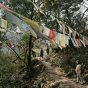 Prayer flags next to the Gasa hot springs known locally as Gasa  Tshachuu, known for their healing powers.