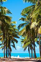 beautiful beach of maracaipe near Porto de Galinhas pernambuco state brazil