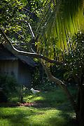 Chicken feeding in village, Tufi, Cape Nelson, Oro Province, Papua New Guinea