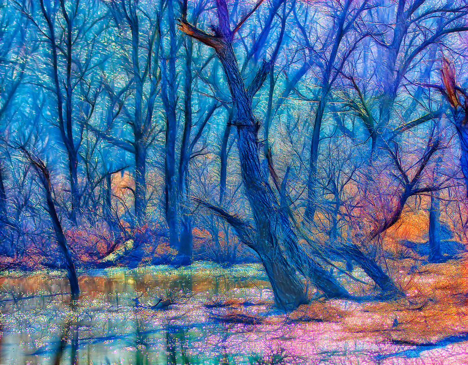 A mystical swampy marsh filled with decrepit trees on a foggy morning with Fairy tale lighting.