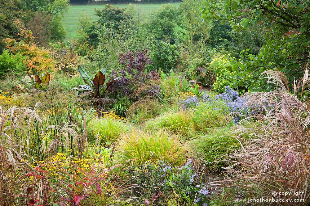 Autumn in the brick garden at Glebe Cottage with Hakonechloa macra, Rudbeckia fulgida var. deamii AGM, bananas and grasses
