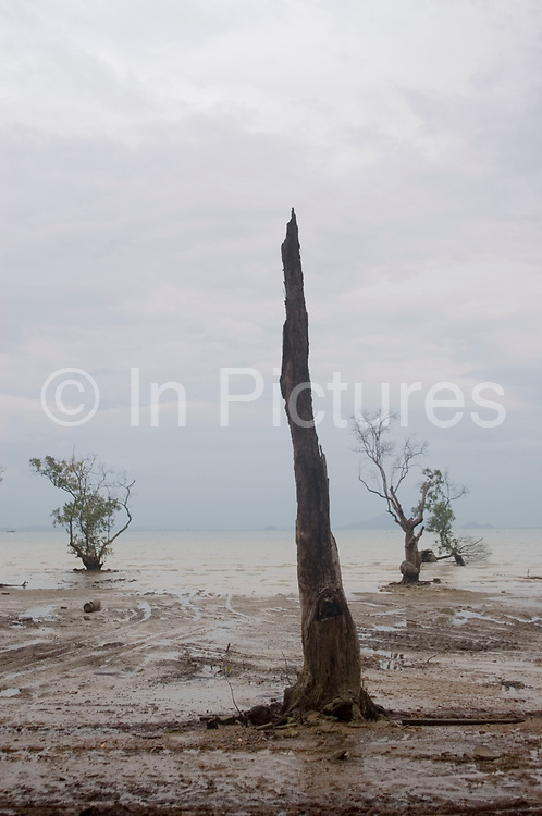 Dead tree at the shoreline at East Railay