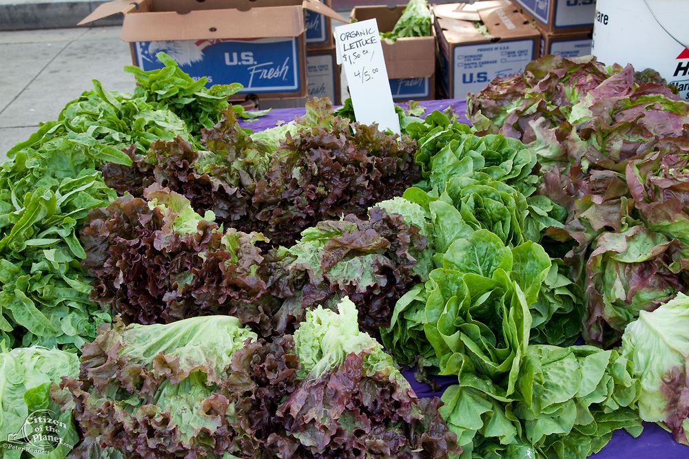 Organic Lettuce for sale at the Culver City Farmer's Market Tuesday afternoons, Culver City, Los Angeles, California, USA