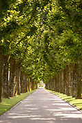 Tree lined path at World War One cemetery, Romagne-sous-Montfaucon, France
