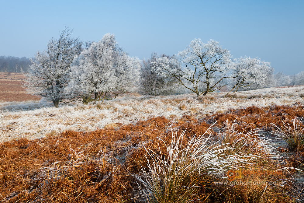 Hoar frost highlights grasses, bracken and trees in the Foxlane Plantation, Ramsley Moor. Peak District, England, UK. March.