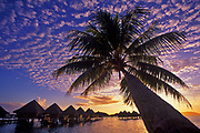 Image of overwater bungalows and palm tree on Bora Bora, Tahiti, French Polynesia by Randy Wells