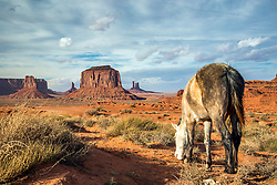 A horse grazes the desert of Monument Valley Arizona