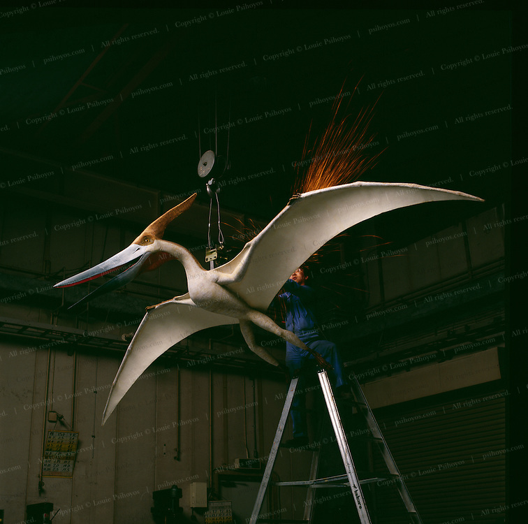 Founded in 1969 Kokoro Company created the first mechanical dinosaur models which are distributed throughout the world.  This Pterosaur is getting a mount to hang from a museum's ceiling.<br /> <br /> <br /> A specimen about one foot across from China.