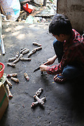 South East Asia, Cambodia, Phnom Penh. Dog paws are often cut of to make a dog paw curry or stew<br /><br />Whilst some people eat dog meat, it is not commonplace. But it is a poorman's meat as it is a cheaper than beef, pork or chicken. The practice of hunting and catching stray dogs is common place, and sometimes even poaching domestic dogs. The Khmer prefer wild dog to 'farm' grown dogs. However the dogs are often treated inhumanely, and killed by strangulation or even boiled alive. It is thought by some that a dog filled with fear makes better meat. The animal is shaved and butchered. Favorite khmer dishes include dog paw curry and dog's head.<br /><br />Dog meat is eaten all over the world. An estimated 25 million dogs are eaten every year. For some societies eating dog is taboo, for others its acceptable.