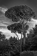 The Pines of Rome, Italy
