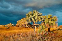 Madagascar. Parc National de l'Isalo. // Madagascar. sandstone massif in the Isolo national park.