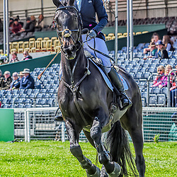 Badminton Horse trials Gloucester England UK May 2019 Emily Hislop-Webb equestrian eventing representing Great Britain riding Waldo III in the Badminton Horse trials. Badminton Horse trials 2019 Winner Piggy French wins the title
