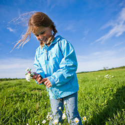 A girl (age 8) picks daisies in a hay field on a farm in Ipswich, Massachusetts.