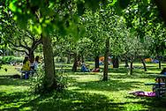 The apple-tree garden of Rosendals trägård.