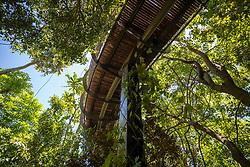 January 4, 2018 - Cape Town, Western Cape, South Africa - View from below of The Centenary Tree Canopy Walkway at the Kirstenbosch Botanical Gardens in Cape Town, South Africa (Credit Image: © Edwin Remsberg / Vwpics/VW Pics via ZUMA Wire)