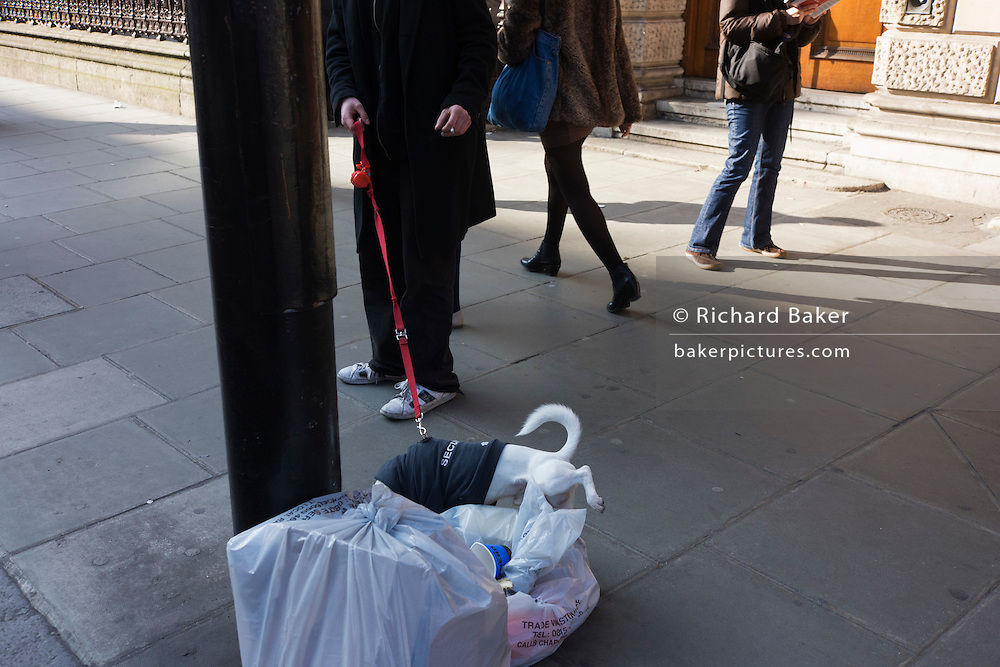A small dogs pauses to pee against a pile of rubbish on a central London street.