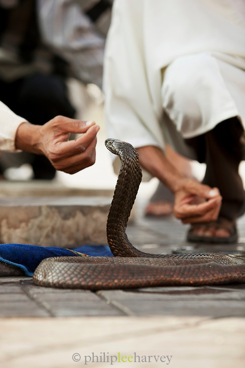 Snake charmers perform to the crowds at the Djeema el Fna in the medina of Marrakech, Morocco