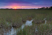 "The sun rises over the Florida Everglades, known as the ""river of grass."" The Everglades is actually a river - a slow-moving river that's 50 miles wide and averages only six inches deep."