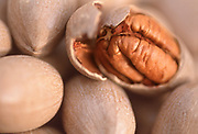Close up selective focus photograph of unopened pecans in their shells