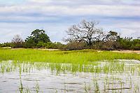 High tide covers marsh grass in a coastal salt water marsh along the Atlantic