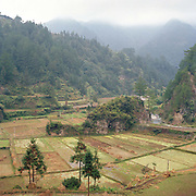 A landscape view of recently harvest rice paddy fields in the Miao ethnic minority village of Langde, Guizhou province, China.