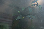 Foliage seen through an office window on 25th June 2020 in London, United Kingdom. Giving a mysterious atmosphere through frosted glass, the plants and leaves interract with light outside.