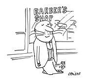 (Man coming out of a barber's shop with a moustache exactly like his cat's)