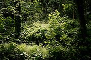 Walking through a forest - Wandelen door het park Clingendael